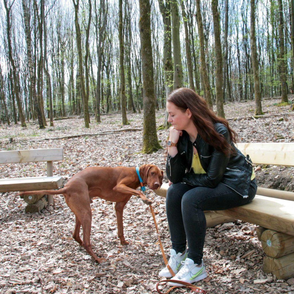 Vizsla streubt sich gegen Ruheübung beim Spaziergang